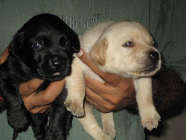 Small Beautiful Dogs For Sale