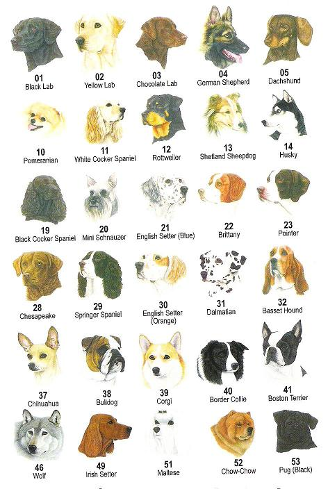 Small Dog Breeds A-z